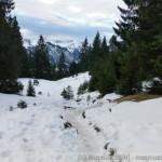 nur im Wald liegt eine geschlossene Schneedecke