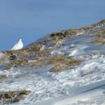 Rappenseehütte im Winter - zwei Schneehühner