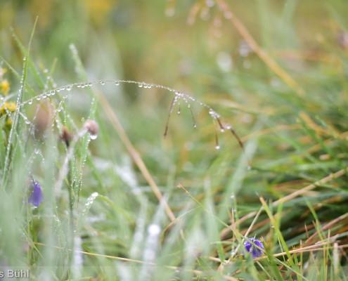 Walser Ultratrail - nasses Gras