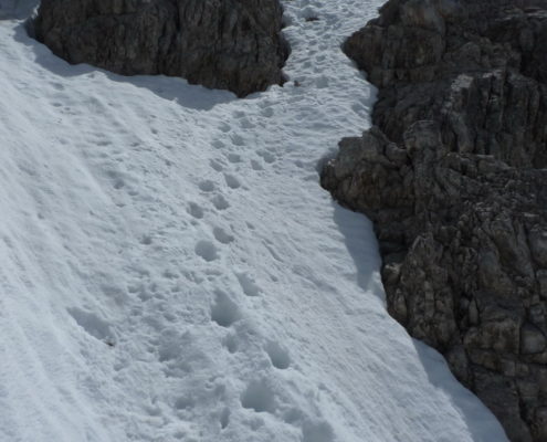 Abstieg vom Steinschartenkopf